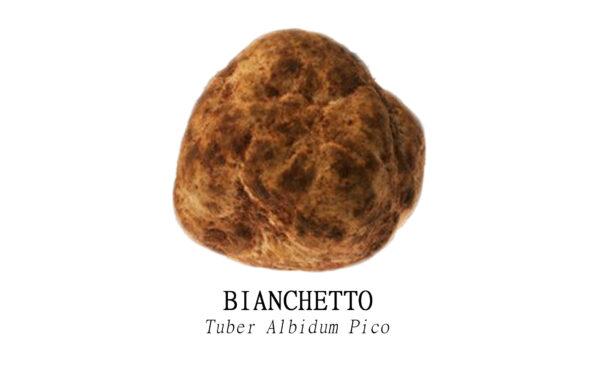 Tartufo Bianchetto o Marzuolo Fresco